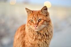 cat (RAMI SABER DAHMOUS) Tags: 50mmlens d7000 nikond7000 ramidahmous