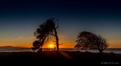 Time to Plan (ScorpioOnSUP) Tags: ocean california trees sky cliff moon lighthouse grass port dark stars harbor pier ships southerncalifornia oceanview sanpedro bluff breakwater darksky terminalisland pointfermin santiagopeak sunriseglow
