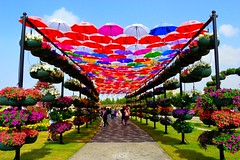 Umbrella roof (RSK.2016) Tags: park travel flowers blue roof sky sunlight green tourism colors beautiful umbrella wonderful garden colorful dubai day colours bright outdoor uae places tourists explore shade experience variety dubaimiraclegarden