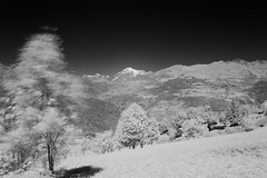 infrared long exposure looking at monte bianco (Jacopo Pregnolato) Tags: trees sky blackandwhite white black mountains tree nature beautiful landscape nikon long exposure day wind filter infrared valledaosta d3200