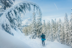 Bennett Pass Ski Camping (gabriel amadeus) Tags: camping winter mountain snow ski forest skiing mthood backcountry hood touring bennetpass