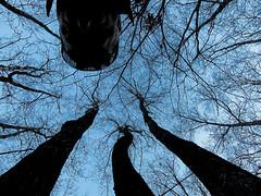 Weird Forest (candus68) Tags: winter forest weird wald seltsam