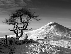 Roseberry Winter (Dave Snowdon (Wipeout Dave)) Tags: winter blackandwhite snow tree landscape northyorkmoors northyorkshire roseberrytopping wipeoutdave canoneos1100d davidsnowdonphotography djs2016