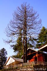 SGRN2015-09_121 (Ayesha Khalid Khan) Tags: pakistan kaghanvalley shogran northernpakistan naturephotography travelphotography pinepark pakistantourism pineparkhotelsresorts