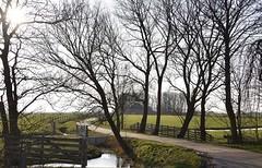 Landerijen en bossages nabij Groot Wetsinge (Gr.) (Maarten Kroon) Tags: holland netherlands dutch landscape nederland thenetherlands groningen reitdiep landschap garnwerd platteland wetsinge