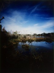 That Same Somewhere I Wasn't Supposed To Be (dreamscapesxx) Tags: lomography bluesky instant marshland sawgrasslakepark offthebeatenpath swampland amazingsky saintpetersburgfl lotsofshadows fujiinstaxminifilm lomoinstant snapitseeit stillfiguringthiscameraout