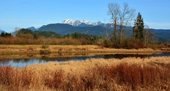 View of the Golden Ears Mountains ( Peterson Photogr@phy  Happy 2016!!) Tags: dykes canada landscape nikon britishcolumbia wetlands marsh pittmeadows alouetteriver pittpoulder pittriverdykes nikond5200 southarmalouetteriver nikonafs18140mmf3556edvr