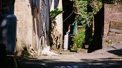 P2081876 (Kyatto) Tags: cat taiwan olympus kit   m43 em10  40150