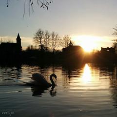 Swan at Puigcerd (Vera_JM) Tags: espaa catalunya puigcerd