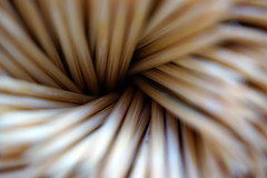 toothpicks (andrei comsa) Tags: macro sony filter toothpicks a6000