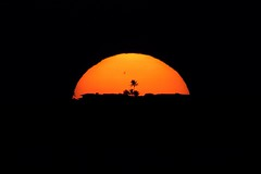 Sunspot Palm (bjfultn) Tags: sunset orange sun tree star mirror nikon hyperfocal palm telephoto astrophotography astronomy 500mm sunspot
