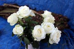 White Roses (Davydutchy) Tags: white flower fleur rose roos blume wit weiss blanc bloem wyt roas weis blom