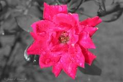 Flower1a (jb5860) Tags: artisticphotos bestartistic jb5860