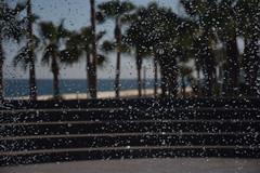 Nikon D3300 (bayaarbilal) Tags: nikon su mersin deniz palmiye sahil aa meydan damla yeniehir nikonphotography nikonphoto nikond3300