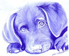 perro a lapicero (ivanutrera) Tags: animal pen sketch drawing perro canino draw dibujo perrito lapicero boligrafo dibujoalapicero dibujoenboligrafo