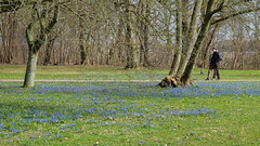 Spring (Hkan Dahlstrm) Tags: park photography se skne sweden cropped f56 2016 alnarp skneln slottspark xe2 xf1855mmf284rlmois sek elevenborgsvgen3 2902042016144813