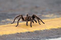 Argentinien_Insekten-51 (fotolulu2012) Tags: tierfoto