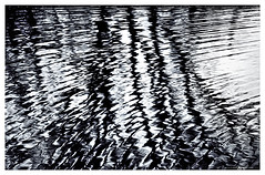 Dark Reflections #1 (Matt Anderson Photography) Tags: county sky bw usa white lake black tree art nature beauty rock horizontal by wisconsin contrast canon reflections matt dark landscape photography amazing scary pond midwest waves foreboding united gothic fine scenic dreary nobody haunted reflected anderson dane ripples states limbs scared evansville scarred reflects unsettling wavelets otherkeywords mattandersonphotography zzzpics