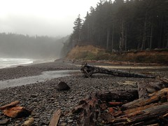 More of the Beach (malchats) Tags: ocean trees mist beach oregon creek forest rocks shoreline logs oswaldweststatepark smugglercove shortsandbeach necarneycreek