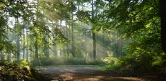 Shards Of Light (Duir Forester) Tags: trees light white green forest woodland shards