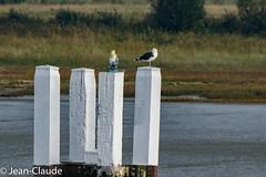 Nieuwpoort - Estacade (bollejeanclaude) Tags: nature photos paysages marins