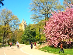 Springtime Central Park (explore) (dannydalypix) Tags: nyc purple centralpark blossoming blooming centralparknyc spring2016