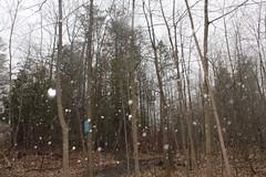 IMG_0401 ( Szczep Wodny Batyk ) Tags: zima wiosna brucetrail snieg wedrowka szczepwodnybaltyk szczepbaltyk silvercreekconservationarea wedrownicy druzyna16ta starsiharcerze