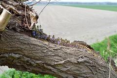 Symbiotic garden (jan neute@85) Tags: cadzand cadzandbad nieuwvliet cavelot strijdersdijk