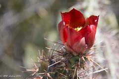 IMG_2980.jpg (ashleyrm) Tags: travel arizona museum sonora desert tucson tucsonarizona