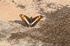 Argentinien_Insekten-67 (fotolulu2012) Tags: tierfoto