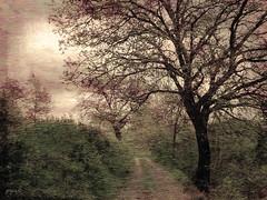 #Music That Goes Around (graceindirain) Tags: trees texture strada wind path sentiero graceindirain