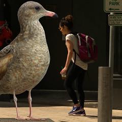 City Bird (swong95765) Tags: city woman bird female downtown seagull gull scavenger territory