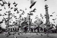 the sound of her wings (dr_zook81) Tags: morning blackandwhite india white black bird monochrome beautiful birds architecture fly wings worship chaos random outdoor pigeon minaret delhi pigeons faith prayer flock flight wide wing fast mosque divine blessing holy dome masjid jama