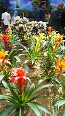 DSC01789 (Kodak Agfa) Tags: flowers gardens spring egypt parks botanicalgardens giza mideast citizenjournalism orman ormanpark flowersfair2016 flowersshow2016