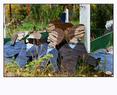 Birch Hill (R. Drozda) Tags: film grave alaska 35mmfilm minoltasrt101 fairbanks gravemarker fujicolorsuperiaxtra800 drozda birchhillcemetery september2015 pandalab3890