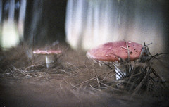 Todo sonho  um pedao de existncia (Tuane Eggers) Tags: mushroom 35mm natureza surreal fungi vida cogumelo sonho fungo existir existncia tuaneeggers