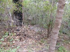 A Sudden Blue (tessab101) Tags: blue mountains bird bottle nest caps reserve australia nsw pegs bower sassafras gully