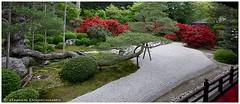 (Damien Douxchamps) Tags: japan temple kyoto    kansai japon   kinki    karesansui      northernsakyo manshuinmonzeki
