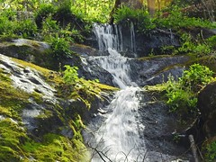 7995ex  P900 climbing Fern Branch Falls (jjjj56cp) Tags: nationalpark spring tn hiking tennessee p900 flowing cascade smokies gsm greatsmokymountains greenbriar greatsmokymountainsnationalpark trailside porterscreek fernbranchfalls brooklettuce jennypansing