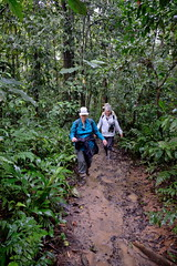 NancyO LC BillO hiking in rainforest near Tambopata Research Center inPeru-01 5-31-15 (lamsongf) Tags: travel peru southamerica tambopata amazonbasin
