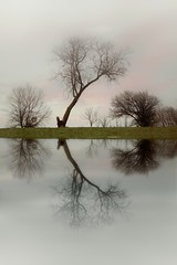 Tree (Sheppeyphotographer) Tags: reflection tree mirror manipulation