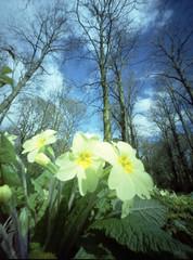 A Walk on the Bright Side (wheehamx) Tags: colour pinhole ayrshire