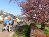 """2016-04-20 Schaijk 25 Km   Foto's van Heopa   (130) • <a style=""""font-size:0.8em;"""" href=""""http://www.flickr.com/photos/118469228@N03/26520362216/"""" target=""""_blank"""">View on Flickr</a>"""