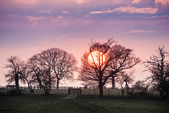 _DSC8211 (Rosemarie Dekert) Tags: trees winter sunset sun landscape evening march berkhamsted 2016