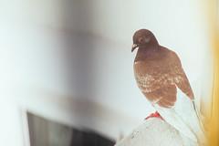 L1002641.jpg (ckann19) Tags: animal aphotoaday fujiprovia400x filmpack