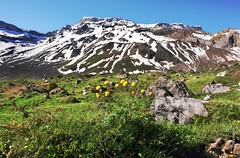 snow and flowers (welenna) Tags: flowers blue schnee summer sky mountain snow mountains alps landscape switzerland view blumen berge alpen blume berneroberland adelboden schwitzerland