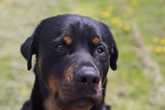 IMG_8204 (Mooney1908) Tags: shadow dog animal sadness hug friend sad needs companion