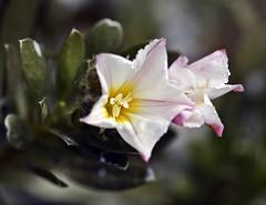 Spring 2016 - 835 LBG (Lostash) Tags: life flowers plants nature spring flora seasons leicesterbotanicalgardens