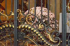 De Gentse Floralin 2016 - Site Sint-Pietersplein/Sint-Pieterskerk (Zeldenrust) Tags: flower church fleur town flora belgium belgique flor belgi iglesia kirche ciudad stadt blume ghent gent kerk eglise ville stad gand gante flanders belgien bloem flandres naturephotography blgica vlaanderen floralin flandern flandre flandes natuurfotografie flowerphotography zeldenrust sintpieterskerkgent ghentfloralies floraliesgantoises vanzeldenrust hendrikvanzeldenrust defloralingent genterfloralien floraliesgantoises2016 floralingent floralin2016