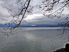 THUN - Svizzera (cannuccia) Tags: landscape grigio nuvola suisse svizzera acqua pioggia paesaggi cieli laghi